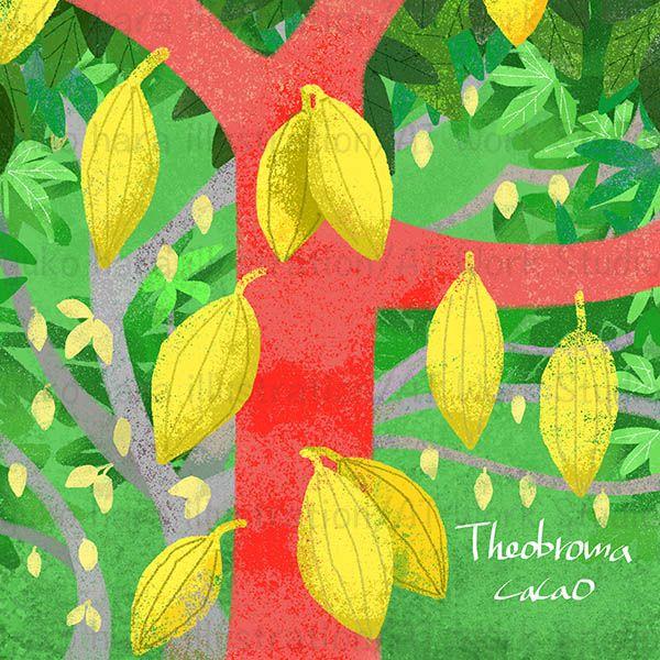 木になるカカオ実のイラスト