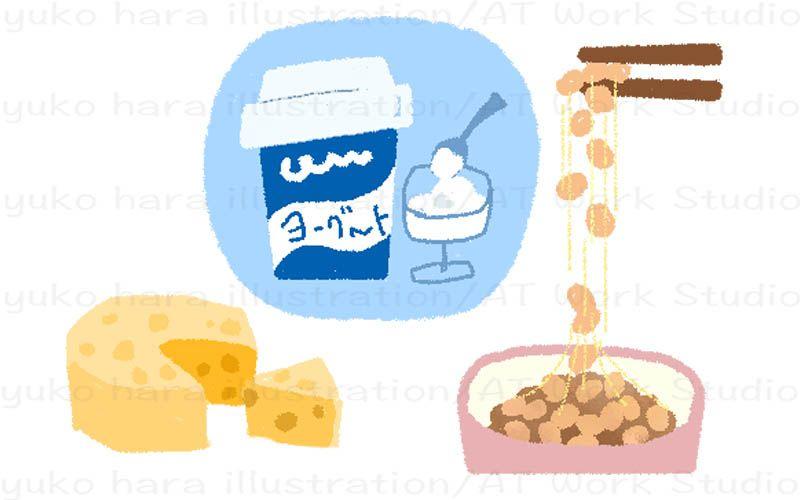 乳酸菌やビフィズス菌を含む発酵食品を描いたイラスト